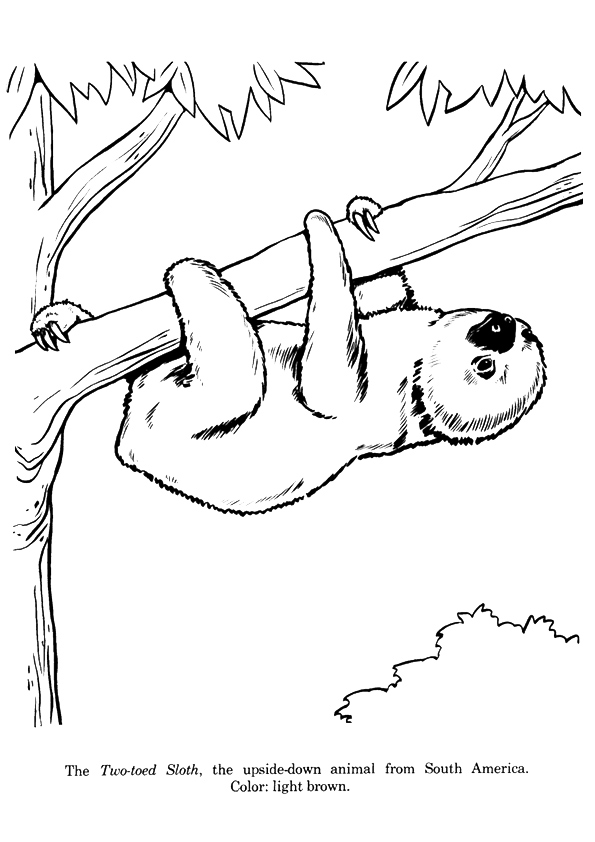 sloth-coloring-page-0011-q2