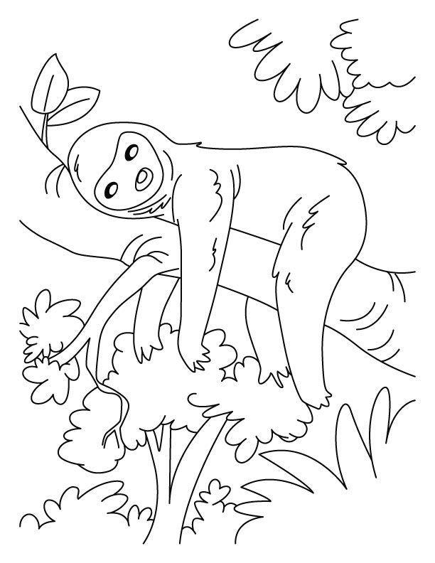 sloth-coloring-page-0022-q1