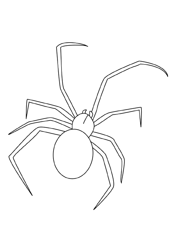 spider-coloring-page-0018-q2