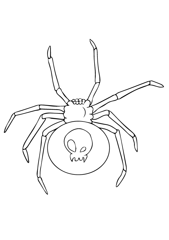 spider-coloring-page-0022-q2