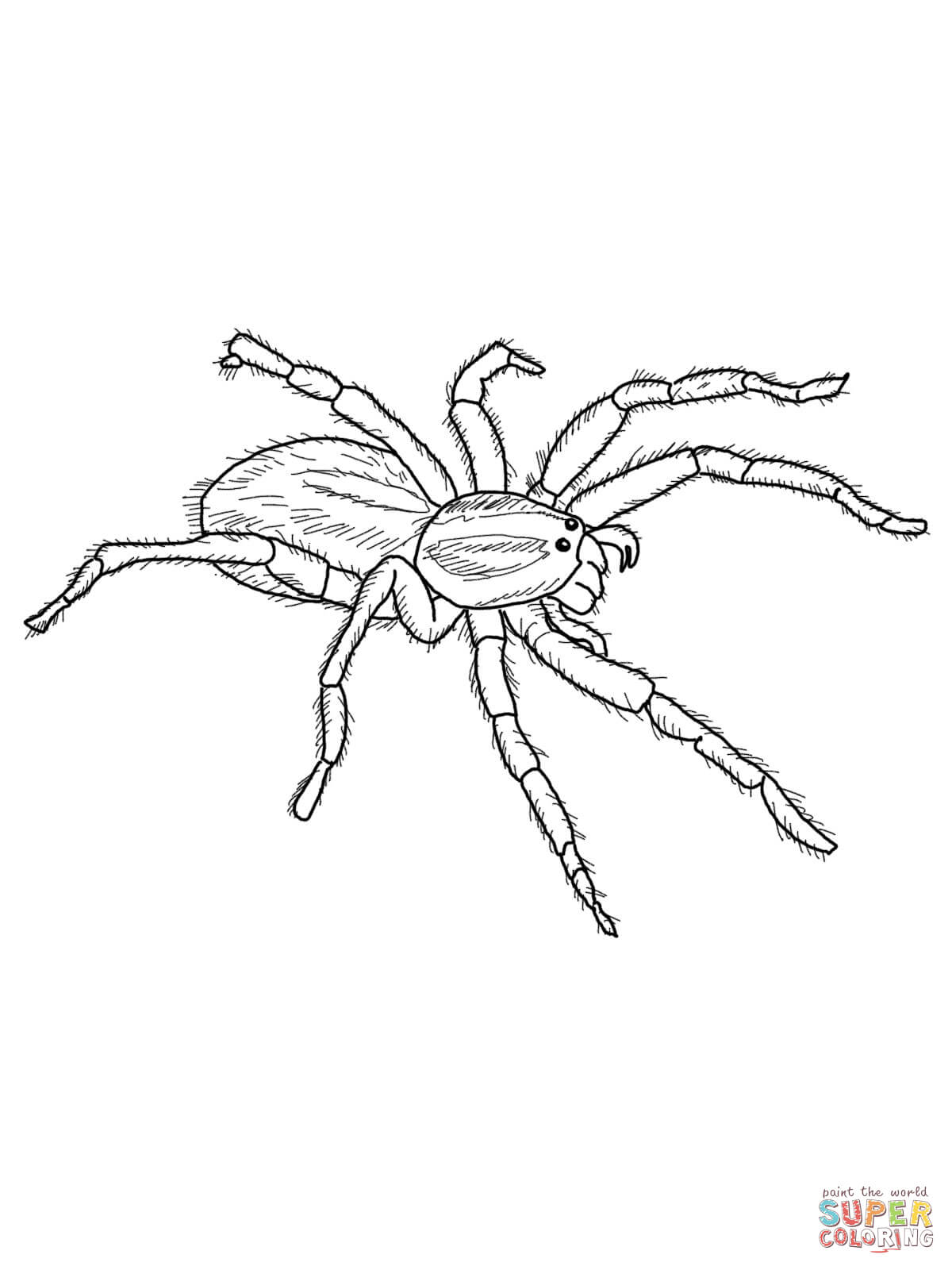 spider-coloring-page-0025-q1