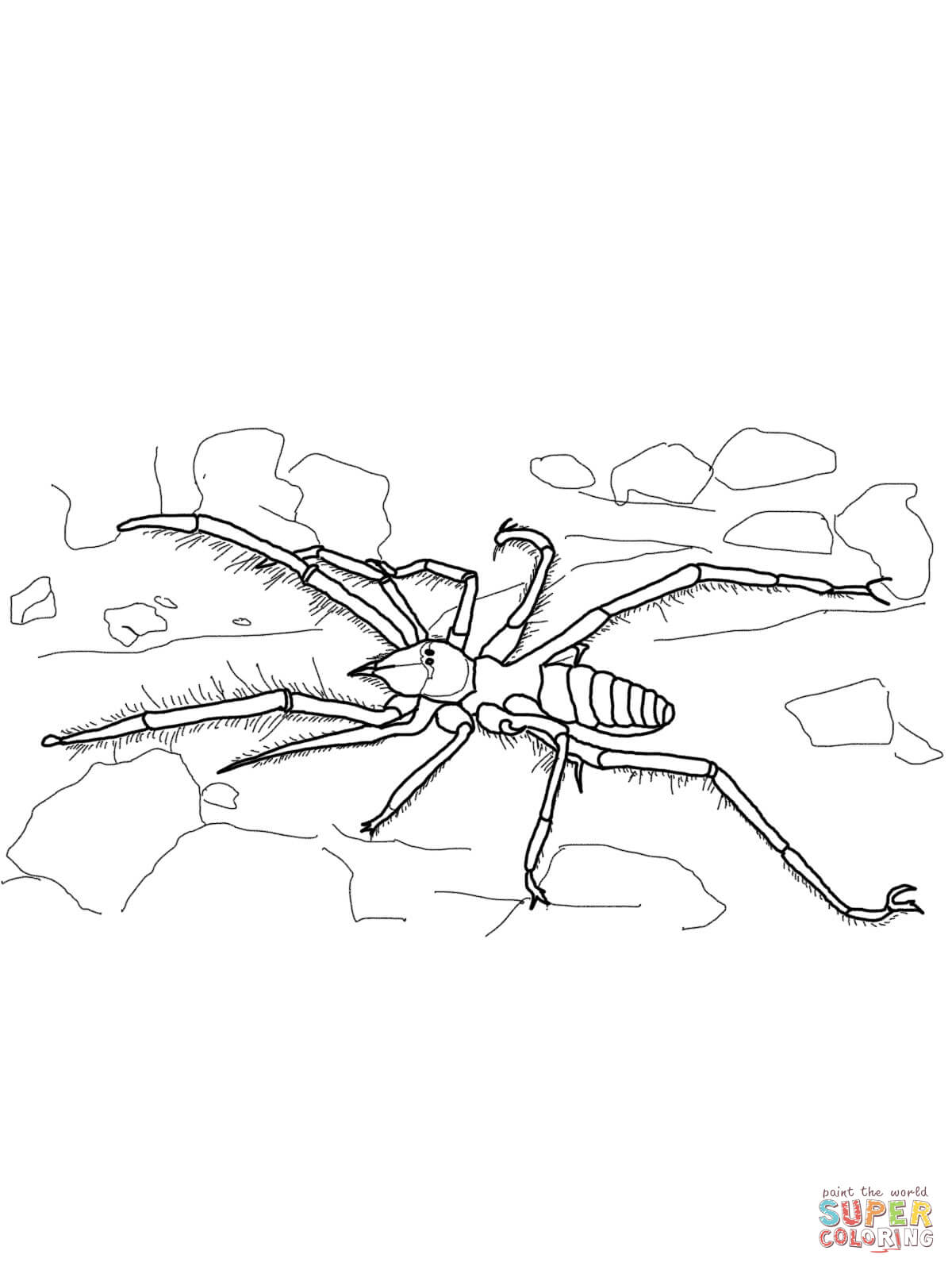 spider-coloring-page-0027-q1