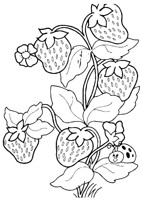 strawberry-coloring-page-0004-q2