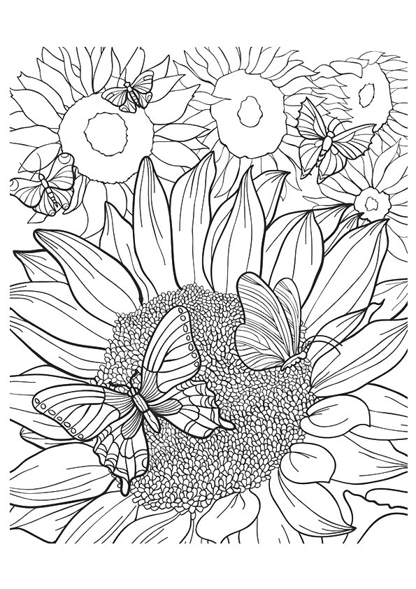 sunflower-coloring-page-0002-q2