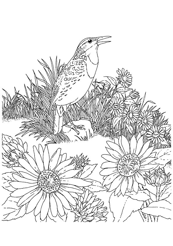 sunflower-coloring-page-0004-q2
