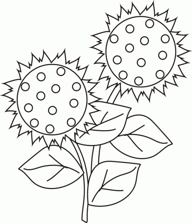 sunflower-coloring-page-0008-q1