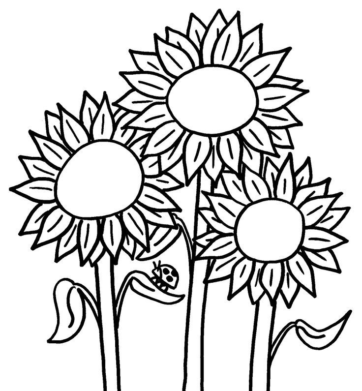 sunflower-coloring-page-0009-q1