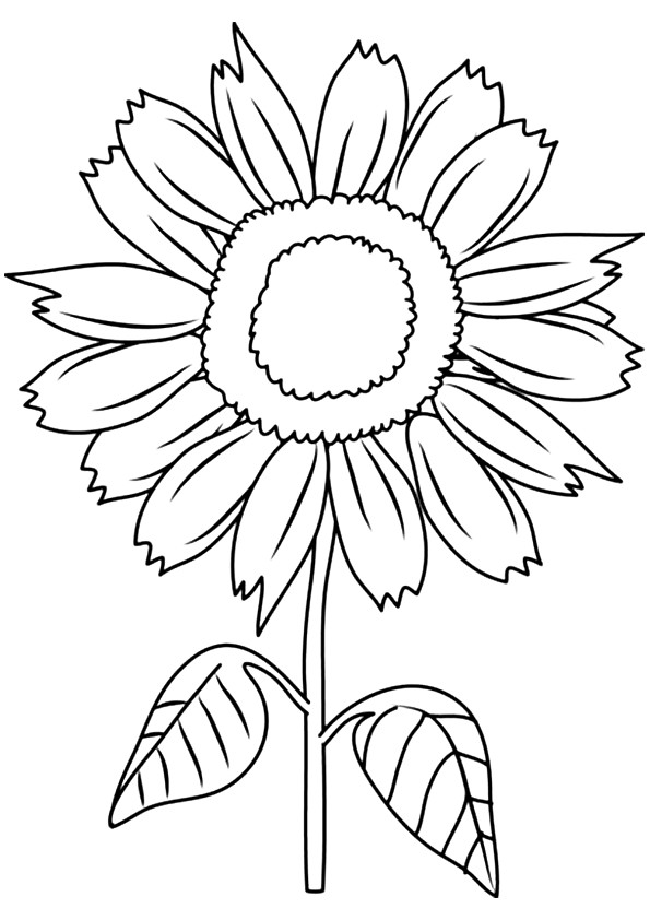 sunflower-coloring-page-0016-q2
