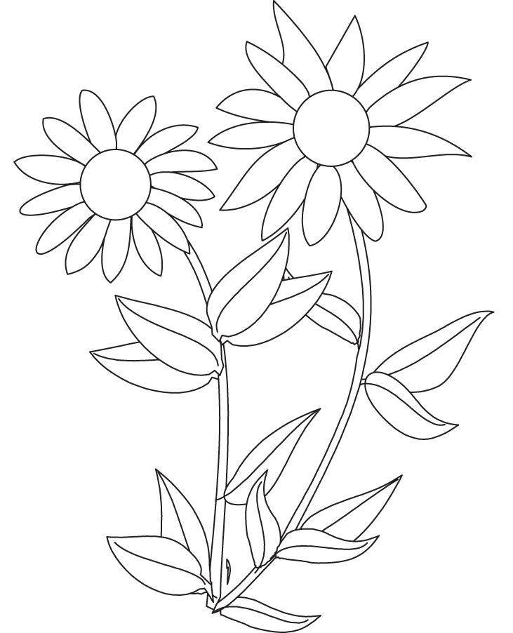 sunflower-coloring-page-0021-q1