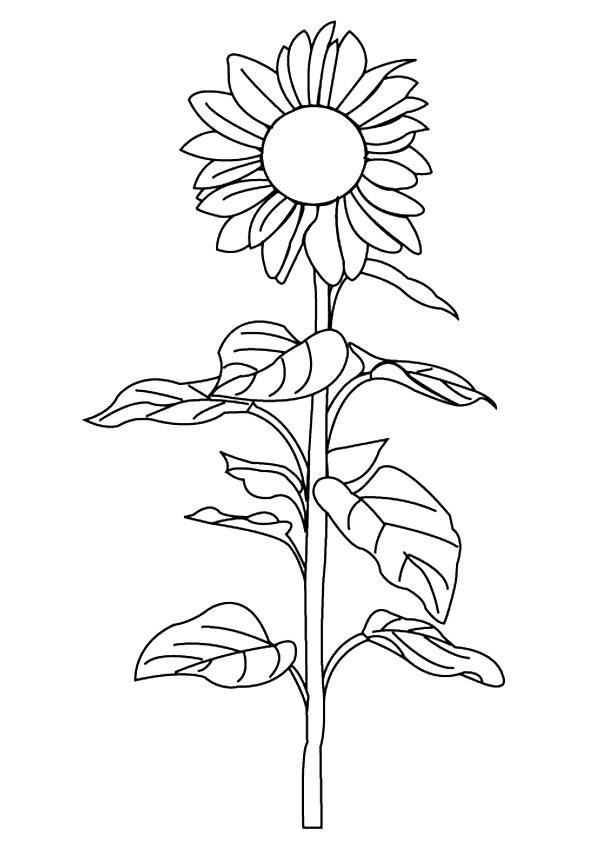 sunflower-coloring-page-0025-q2