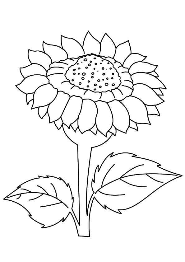 sunflower-coloring-page-0028-q2