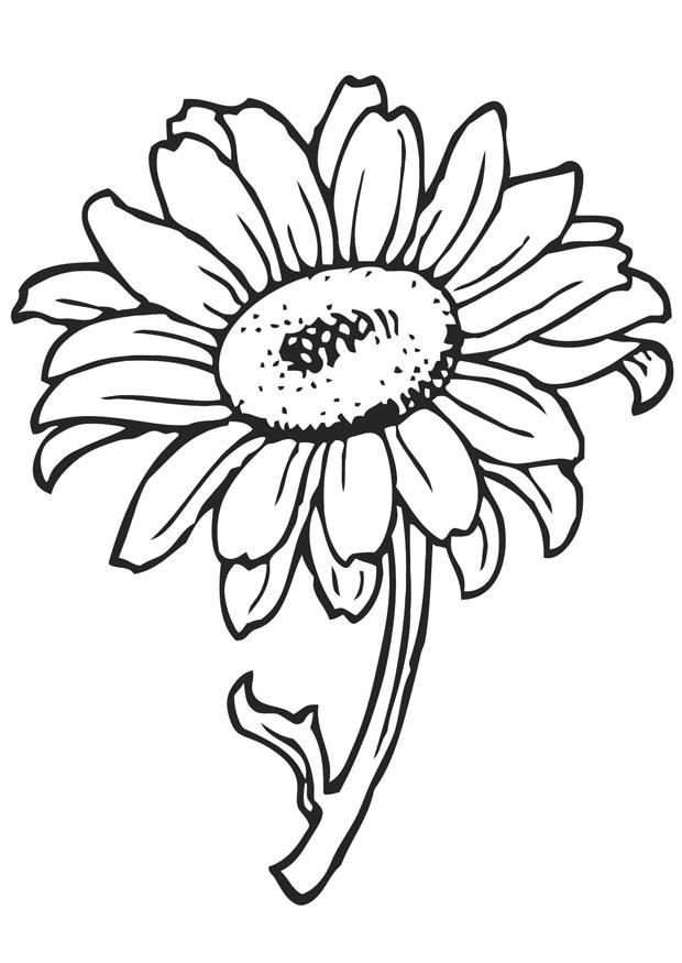sunflower-coloring-page-0030-q1