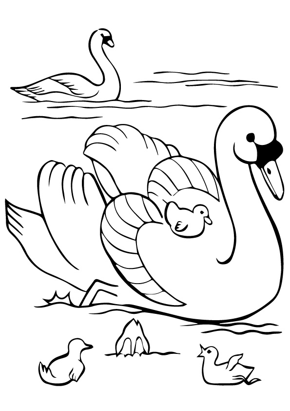 swan-coloring-page-0008-q2