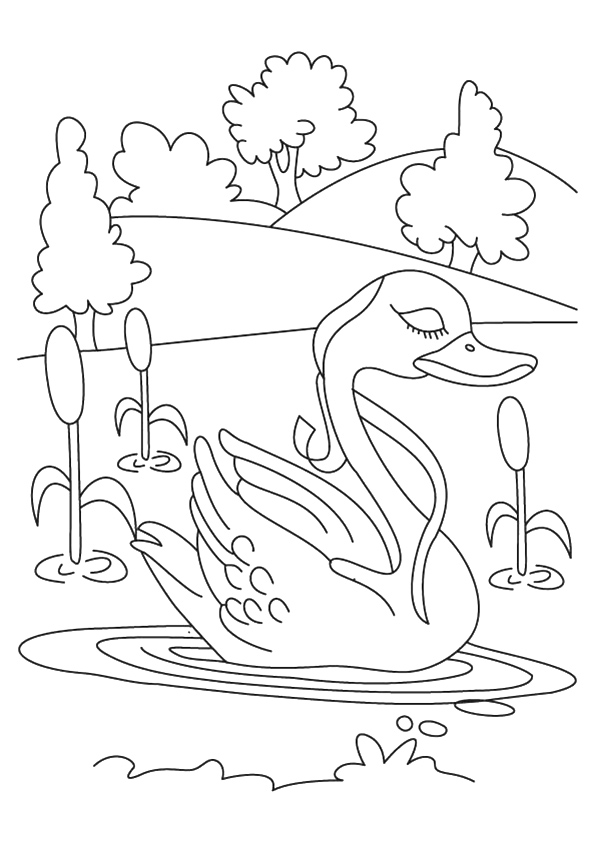 swan-coloring-page-0011-q2