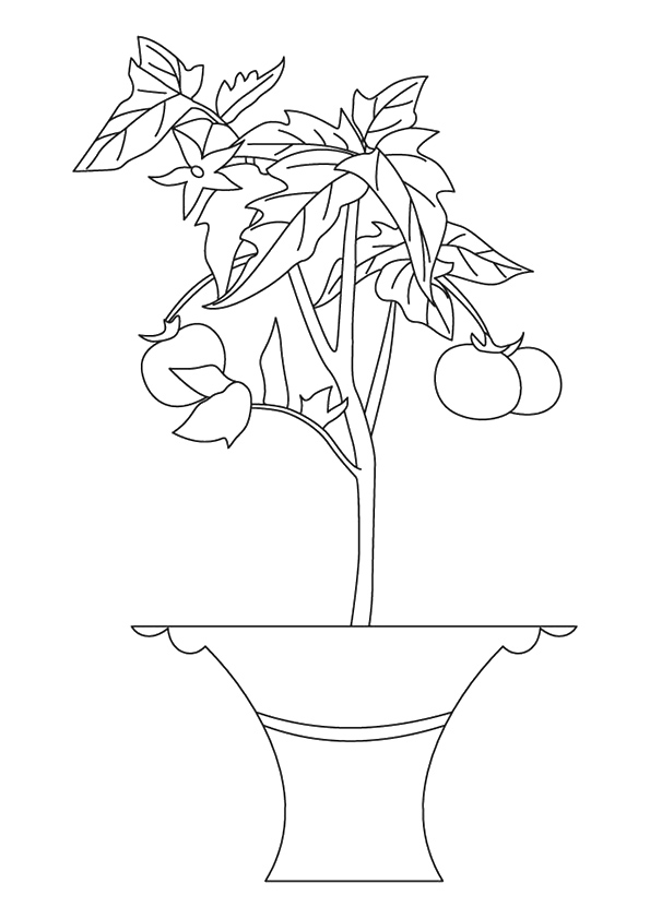 tomato-coloring-page-0008-q2