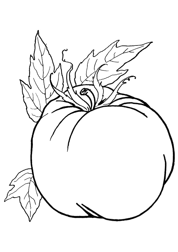 tomato-coloring-page-0009-q2