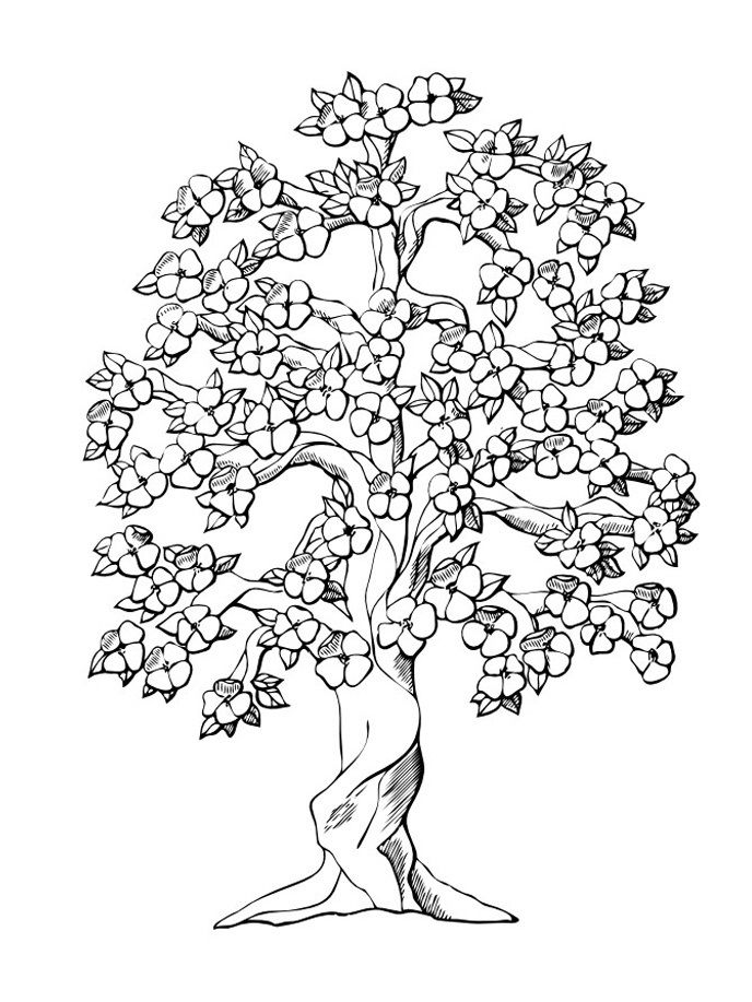 tree-coloring-page-0003-q1
