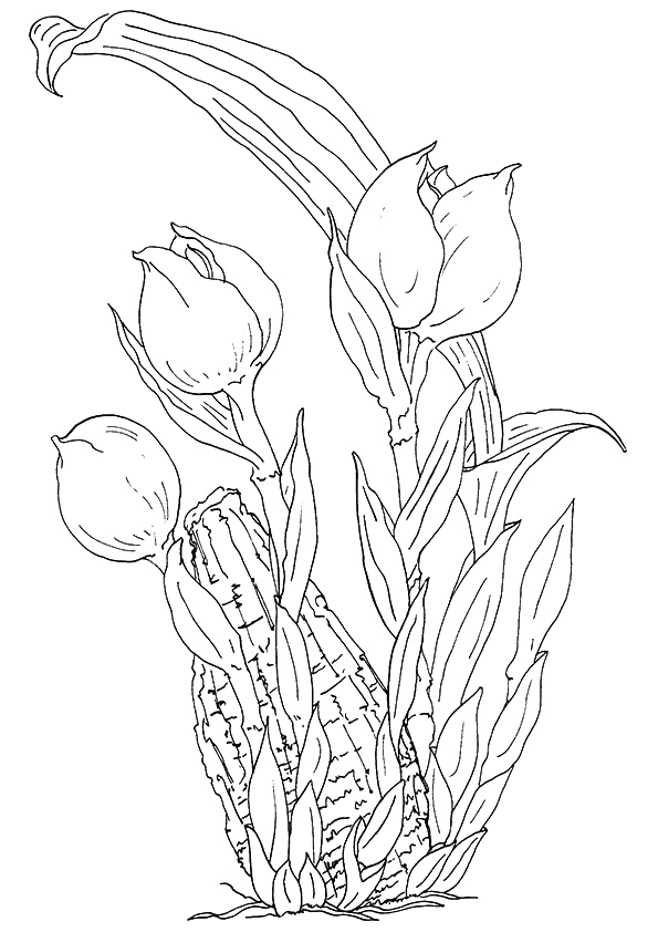 tulip-coloring-page-0001-q2
