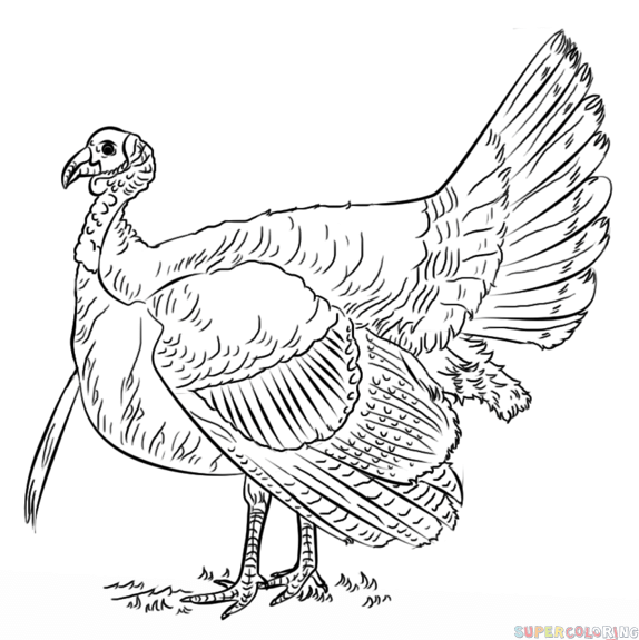 turkey-coloring-page-0031-q1