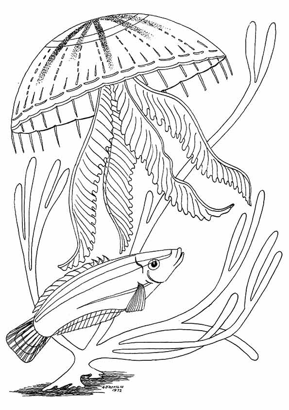 under-the-sea-and-underwater-coloring-page-0028-q2