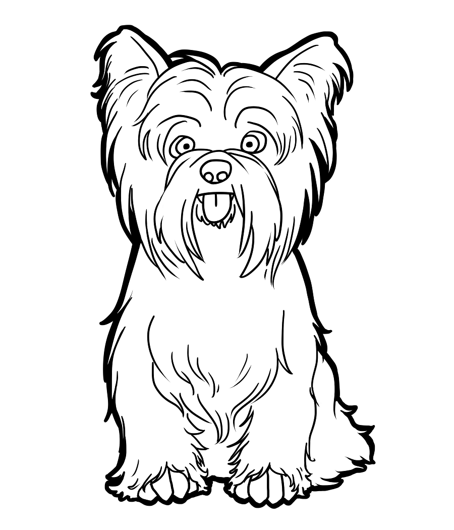 yorkie-coloring-page-0001-q1