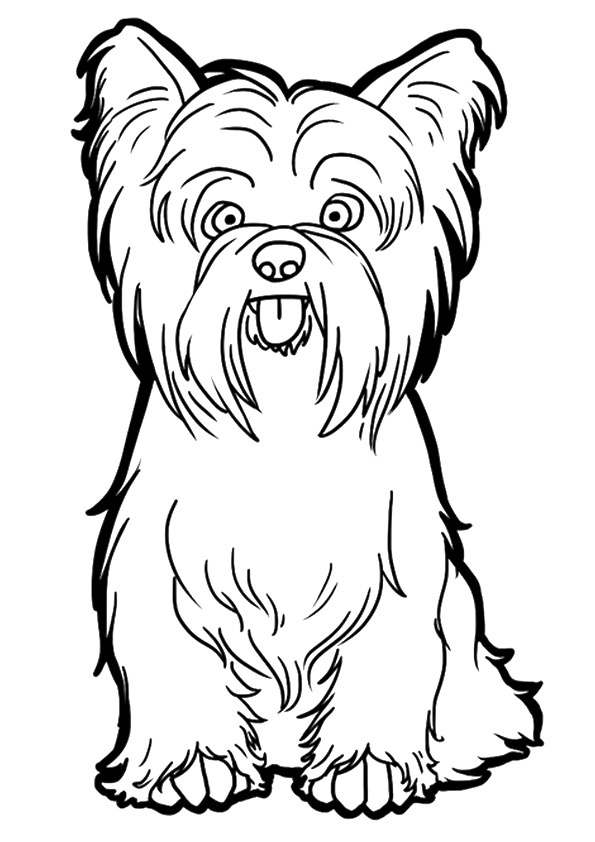 yorkie-coloring-page-0002-q2