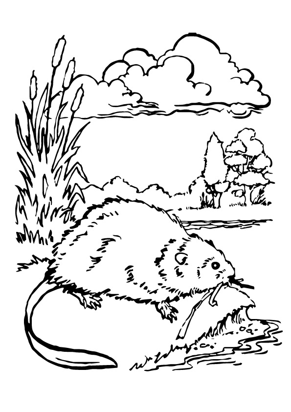 beaver-coloring-page-0002-q2