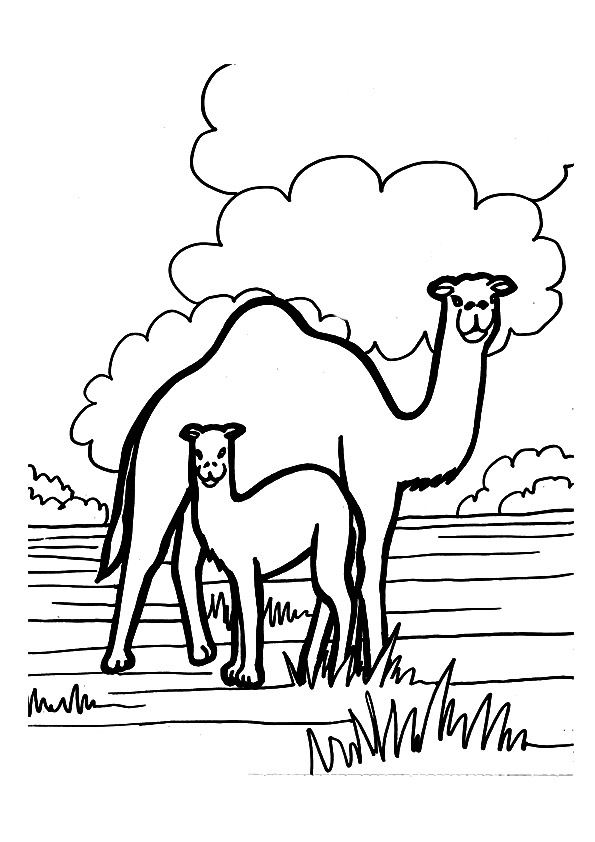 camel-coloring-page-0008-q2
