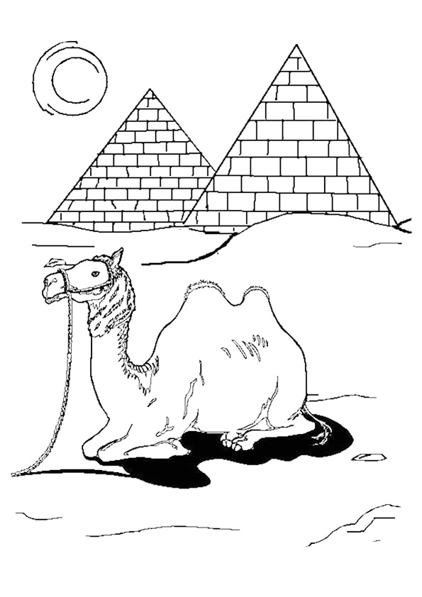 camel-coloring-page-0013-q2