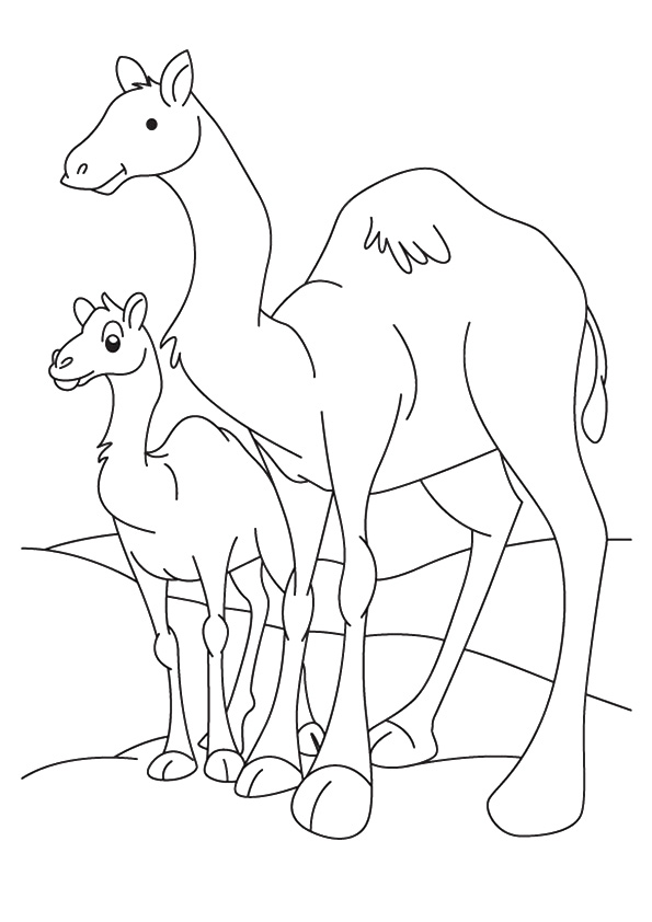 camel-coloring-page-0015-q2