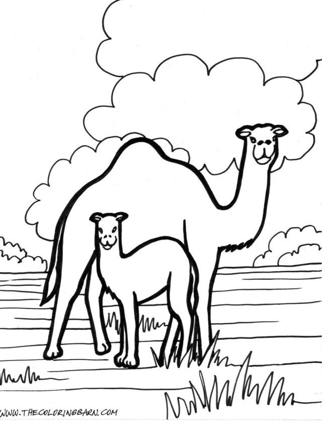camel-coloring-page-0023-q1
