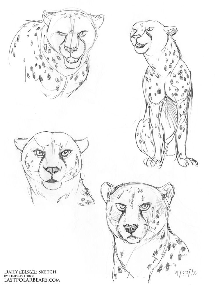 cheetah-coloring-page-0010-q1