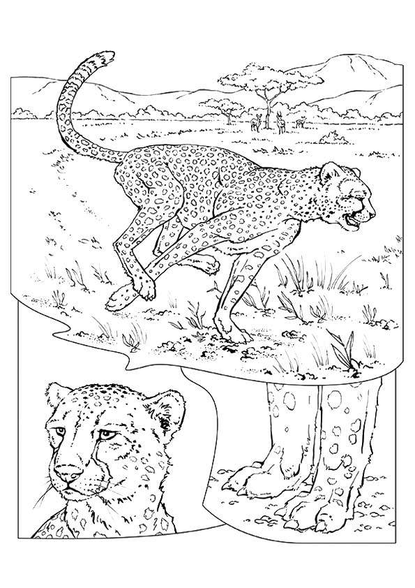 cheetah-coloring-page-0011-q2