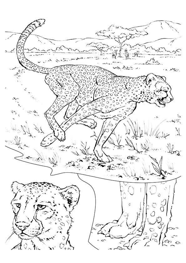 cheetah-coloring-page-0012-q2