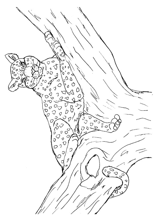 cheetah-coloring-page-0014-q2