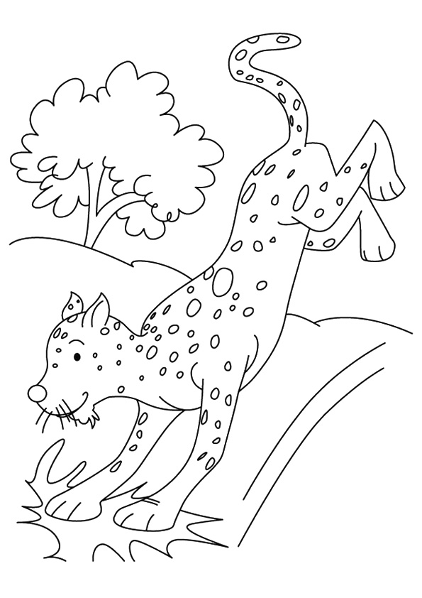 cheetah-coloring-page-0016-q2