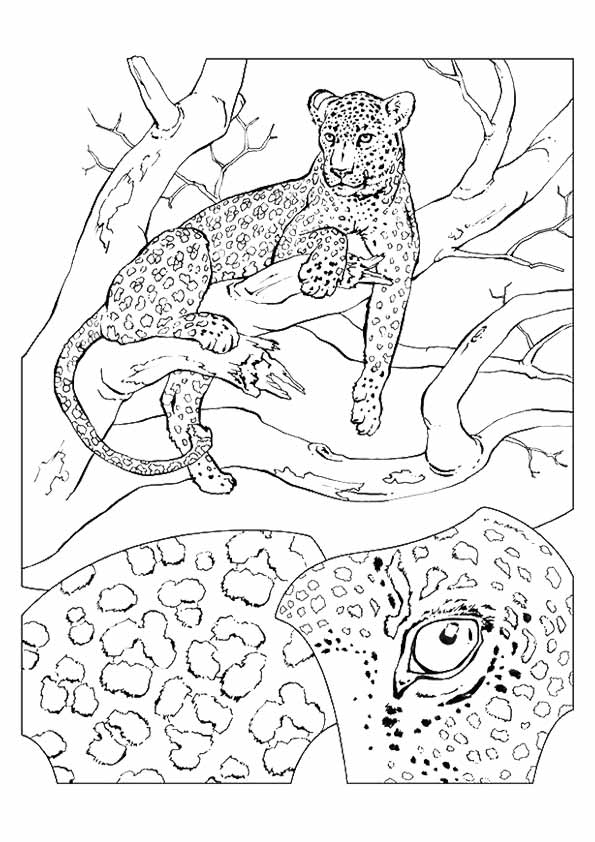 cheetah-coloring-page-0020-q2