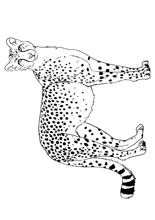 cheetah-coloring-page-0021-q2
