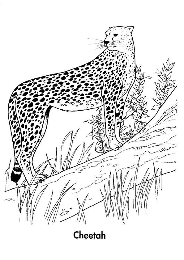cheetah-coloring-page-0023-q2