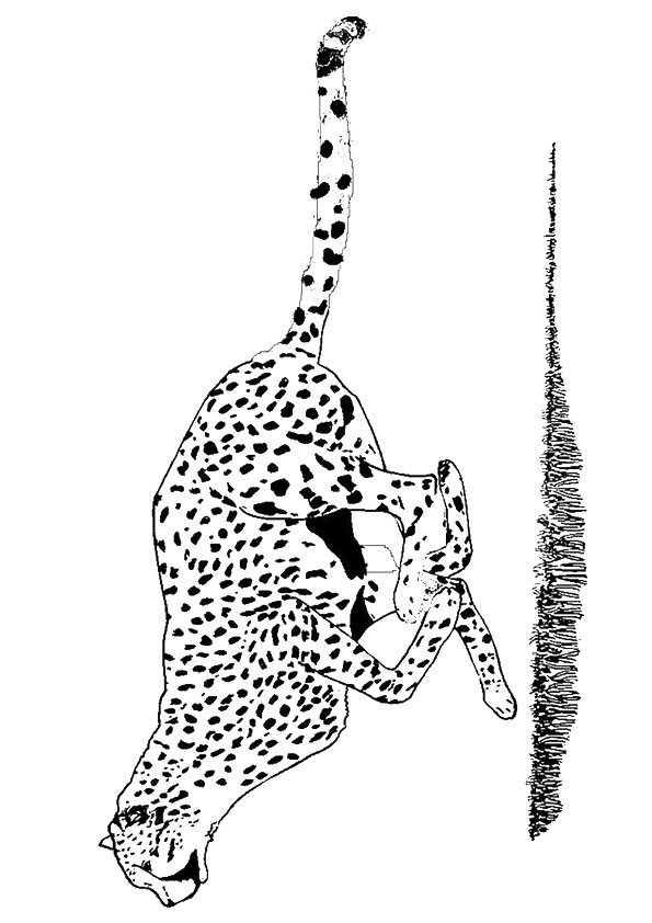 cheetah-coloring-page-0025-q2