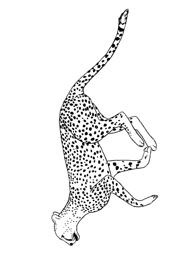 cheetah-coloring-page-0027-q2