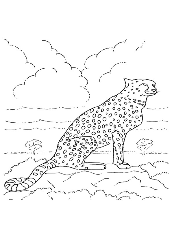 cheetah-coloring-page-0029-q2