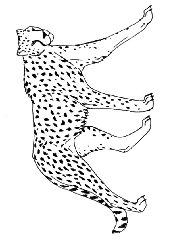 cheetah-coloring-page-0030-q2