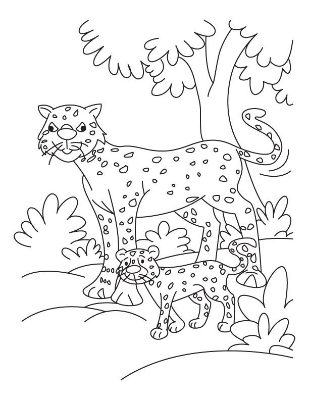 cheetah-coloring-page-0031-q1