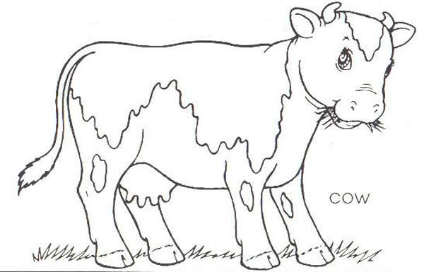 cow-coloring-page-0011-q1