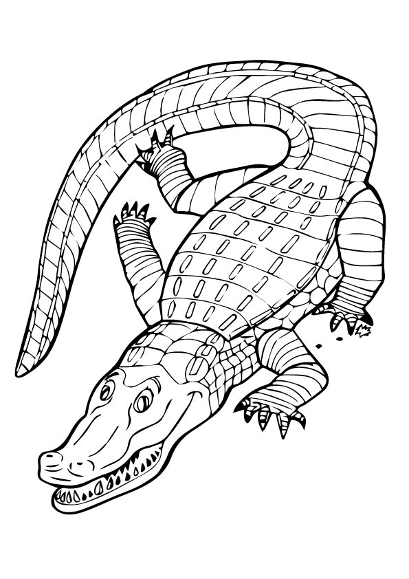 crocodile-coloring-page-0010-q2