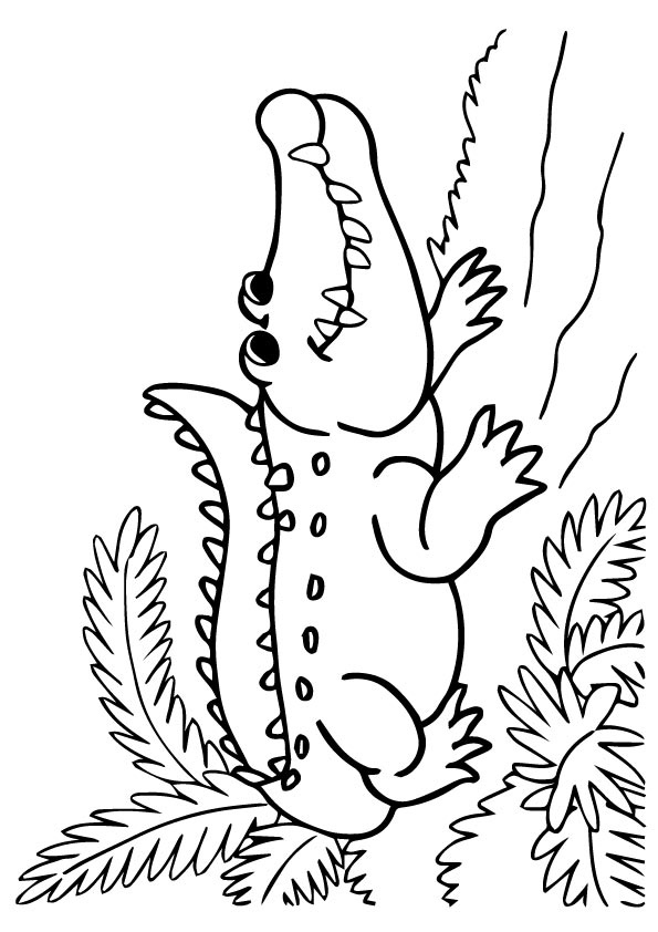crocodile-coloring-page-0014-q2