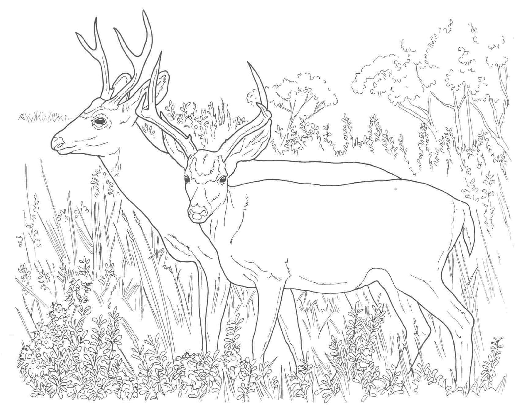 deer-coloring-page-0001-q1