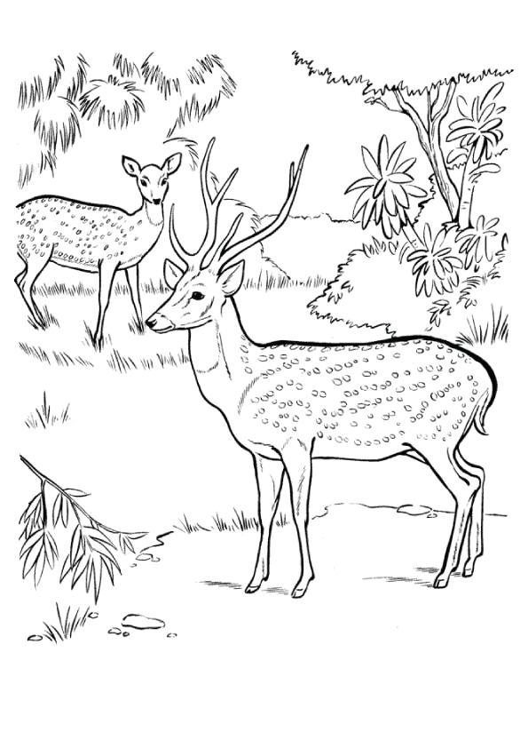 deer-coloring-page-0002-q2