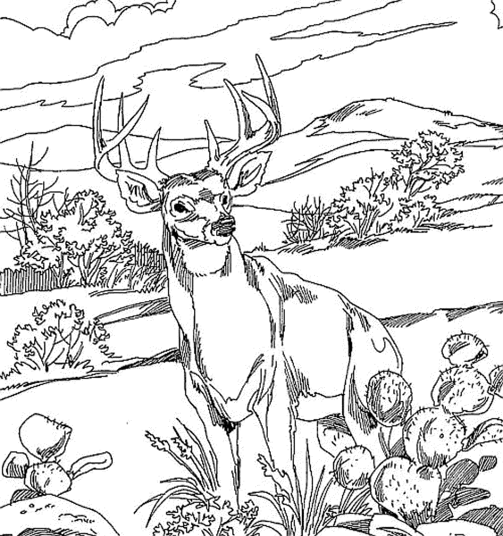 deer-coloring-page-0006-q1